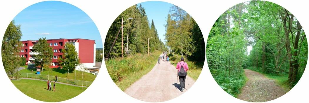 Studieområdene Furuset, Mariholtet og Godliaskogen representerer ulike naturområder. (Foto: Stine Rybråten, NINA)