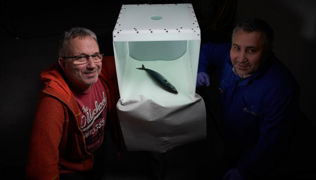 Forskere ved Nofima har utviklet en prototype på en fotoboks med standardisert lys som kan gi viktig informasjon til kjøpere av fisk som selges på auksjon. (Foto: Audun Iversen, Nofima)