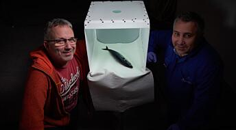 Denne fotoboksen kan gjøre fiskeauksjoner lettere