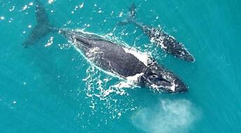 Hør hvalunger snakke med moren sin