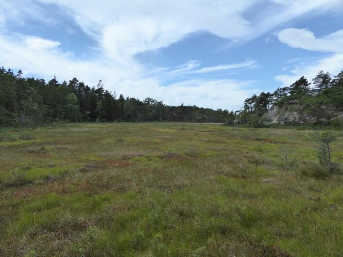 Ilemyr naturreservat på Hvaler – et eksempel på en Åpen jordvannsmyr (V1). Foto: HAU