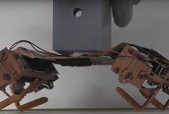 Se robotene som etterligner insekter!