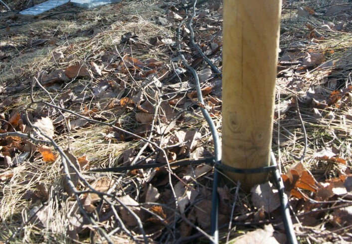 De sorte ledningene som ligger langs bakken er PIT-loggerantenner. Når en en microchip-merket salamander kryper, så registreres det i PIT-loggeren. (Foto: Børre K. Dervo ©)