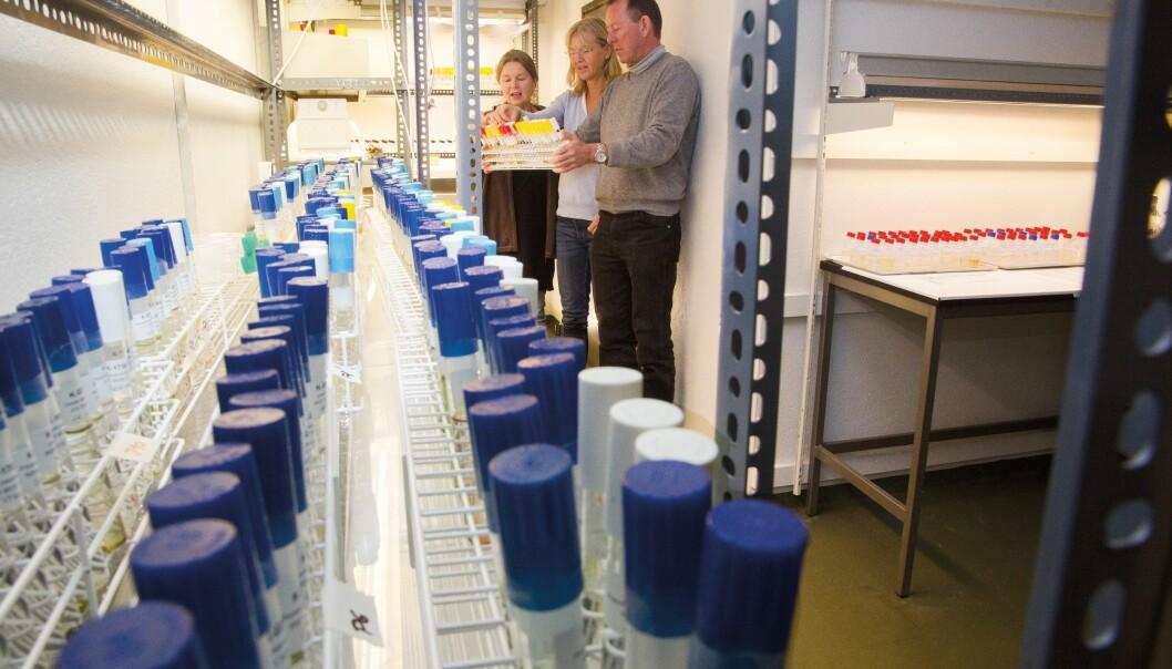 Wenche Eikrem (f.v.), Bente Edvardsen og Stein Fredriksen har ansvaret for Nordens største algesamling. Den inneholder 2100 algestammer fra både ferskvann og saltvann.  (Foto: Yngve Vogt)