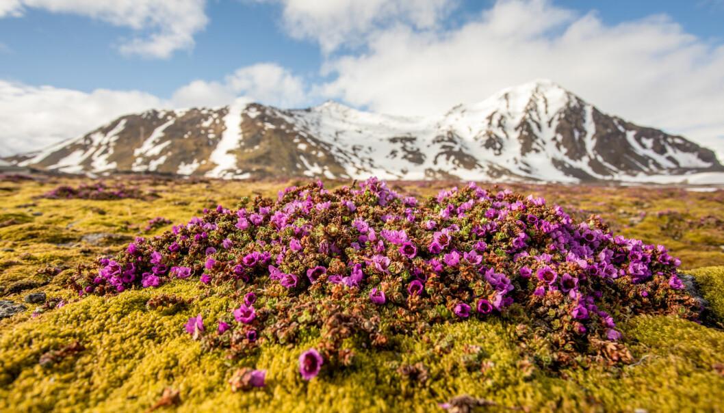 Permafrost er grunn som er frosset hele året. Det finnes permafrost på Svalbard, men også i høyfjellet i for eksempel Nord-norge.  (Illustrasjonsfoto:  JoannaPe / Shutterstock / NTB scanpix)