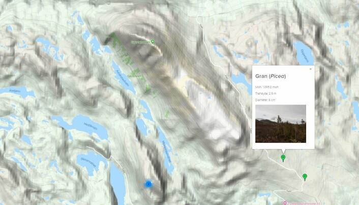 Dette er et bilde fra appen. Her har en vanlig person tatt bilde av en gran og lastet opp. Bildet havner på kartet.