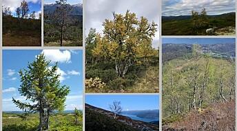 Tur- og fjellfolk i skogforskernes tjeneste