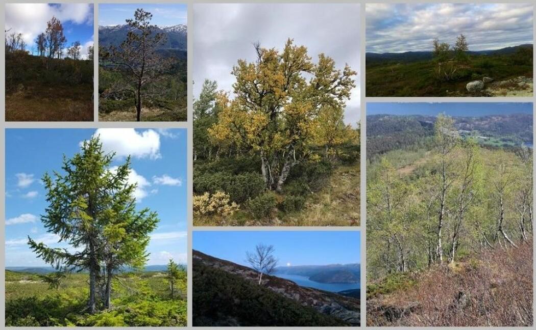 Her er noen av bildene folkeforskere har sendt inn til skogforskerne. (Foto: Natur i endring. Montasje: Eivind Torgersen)