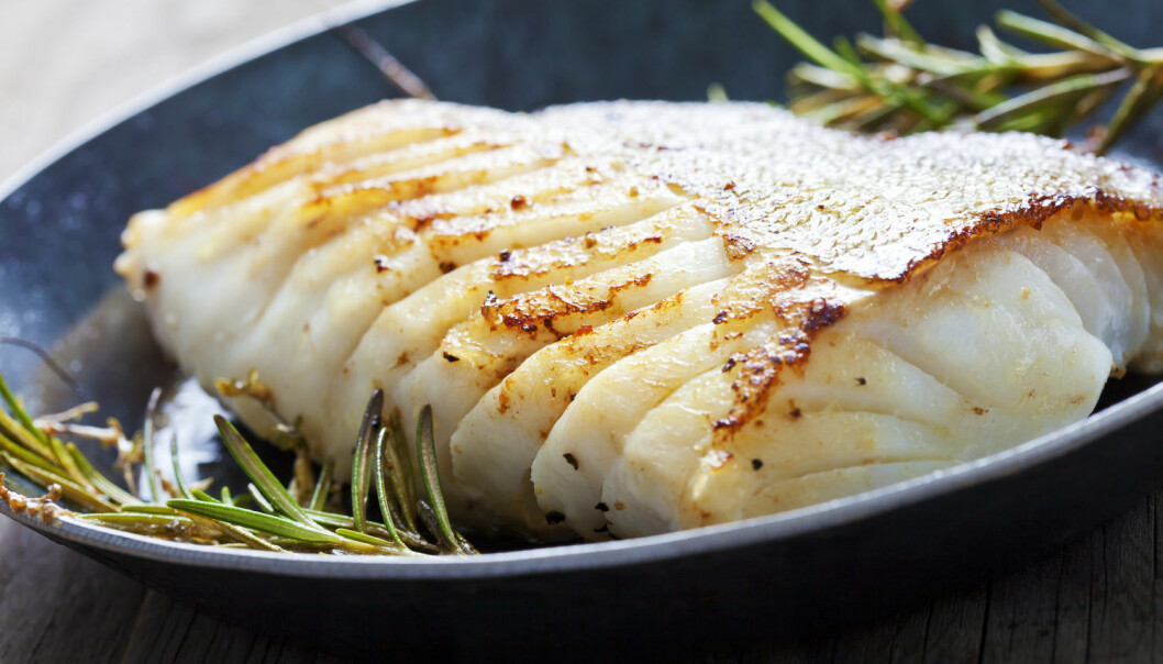 Mager fisk som torsk har kommet ufortjent i skyggen av fet fisk. Mager fisk kan ha bedre helseeffekt, spesielt for overvektige menn, viser ny studie.  (Foto: Shutterstock/NTB/Scanpix)