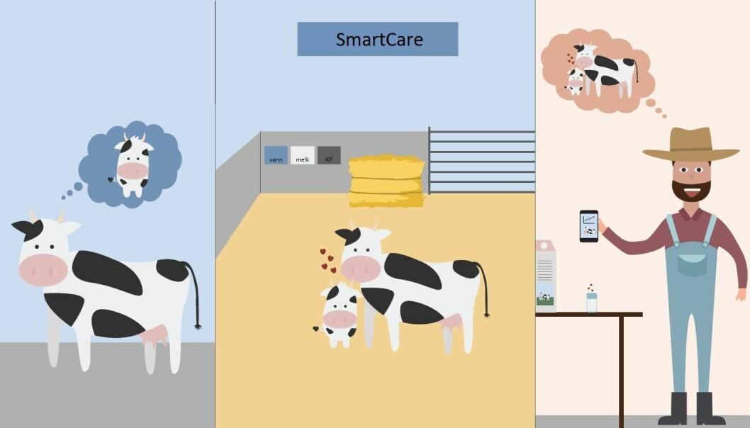 <i>SmartCare </i>er en elektronisk styrt binge-løsning som gjør at kalven kan være sammen med moren sin etter fødselen.