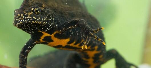 Bli med inn i salamanderens verden
