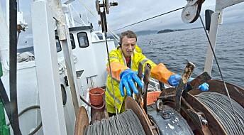 Mystisk fiskedød i Oslofjorden