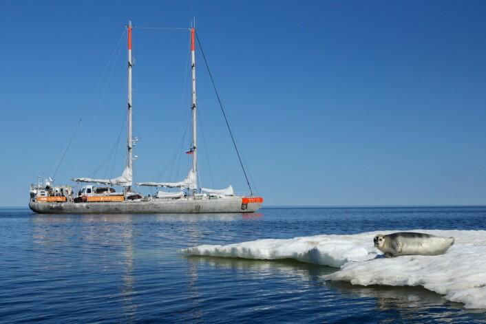 Forskningsskipet «Tara» seiler rundt i Arktis på jakt etter plast. (Foto: Anna Deniaud, Tara Expeditions Foundation)