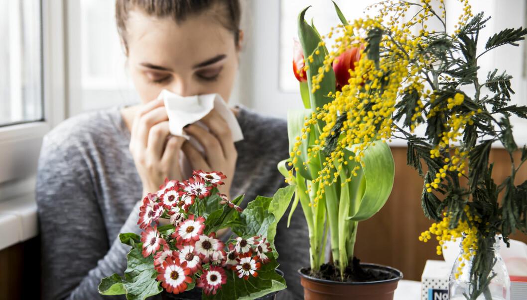 Eksponering for pollen har en stor effekt på eksamensprestasjoner til elever med pollenallergi, viser ny studie. (Foto: Shutterstock / NTB scanpix)