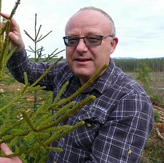 Jo Petter Grindstad i Glommen Skog har funnet frem til de riktige trærne. (Foto: Glommen Skog)