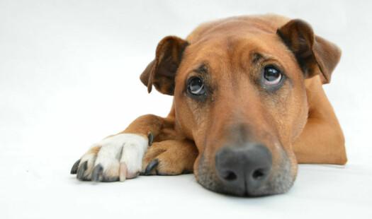 Skremte hunder er ikke morsomt
