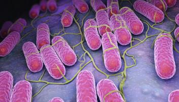 Etter tre dager blir salmonellabakteriene konsentrert i kreftsvulsten 10.000 ganger, noe som er helt utrolig, mener professor Oluf Borbye Pedersen.  (Illustrasjon: Tatiana Shepeleva / Shutterstock / NTB scanpix)