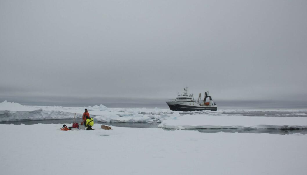 Forskerne måler konsentrasjon av nitrat, et viktig næringsstoff i havet, både der sjøen er fullstendelig dekket av is, delvis under is og i åpent farvann. Her fra et tokt med forskningsskipet Helmer Hanssen. (Foto: Birgit Nesheim)