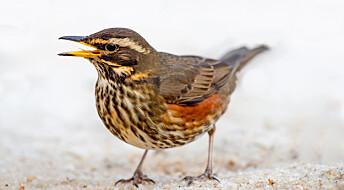 7 ting du kanskje ikke visste om fuglesang