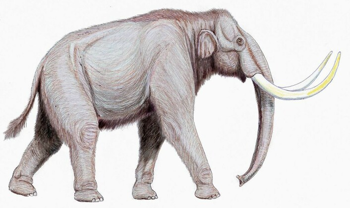 Mammuten var sannsynligvis ganske næringsrik. Dette er en steppe-variant. (Foto: (Illustrasjonsbilde: Dmitry Bogdanov/CC BY 3.0))