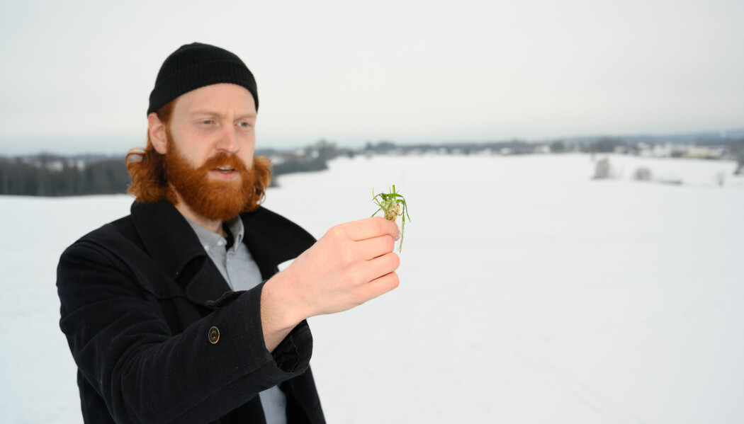 NIBIO-forsker Frederik Bøe håper at flere får øynene opp for fangvekster som miljøtiltak. (Foto: Erling Fløistad)