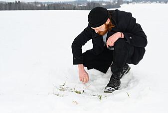 Flerårig raigras tåler frost godt. (Foto: Erling Fløistad)