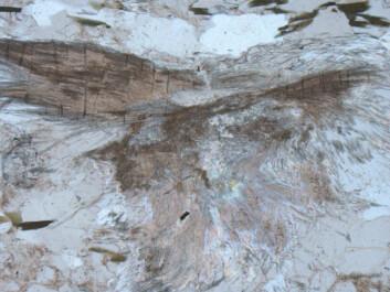 Slik ser sillimanitt ut når du setter det under mikroskopet;.En blanding av store krystaller og fibrige områder utgjør de hvite klumpene vi ser på overflaten av nodulargneisene. (Foto: Ane Engvik / NGU)
