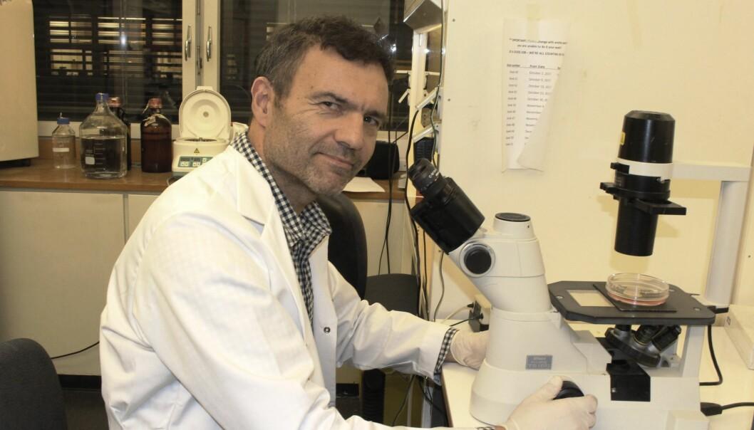 Professor Fahri Saatcioglu er allerede i ferd med å planlegge kliniske forsøk med mennesker. (Foto: Bjarne Røsjø)