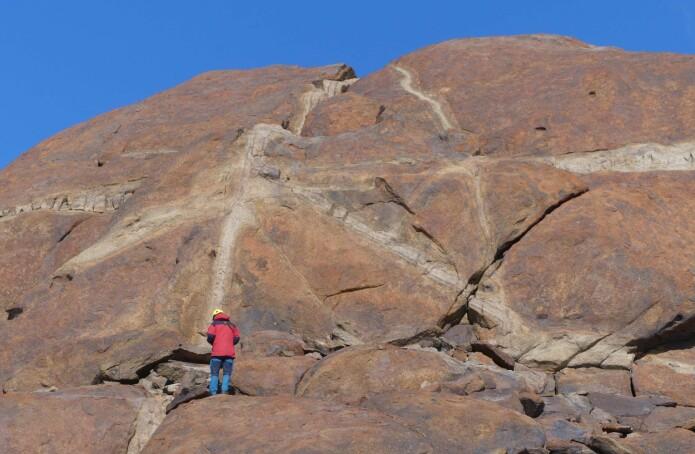 Geologisk feltarbeid i Dronning Maud Land - mørk charnokitt omvandles langs årer gjennom berget. (Foto: Ane K. Engvik)
