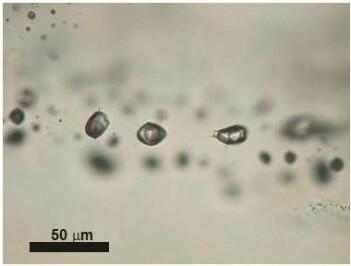 Bildet er tatt under mikroskopet og viser hvordan rester etter væskene ligger bevart i små porer i mineralkornene. (Foto: Ane K. Engvik)