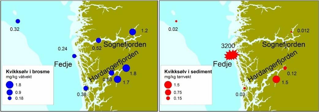 De blå prikkene på kartet viser hvor det er funnet mest kvikksølv i brosme på vestlandet. De røde prikkene viser hvor det er funnet mest kvikksølv i sedimentene på havbunnen og fjordbunnen. Kartene viser at det ikke alltid er en sammenheng mellom mengden kvikksølv i sediment og i fisk. (Illustrasjon: Havforskningsinstituttet)