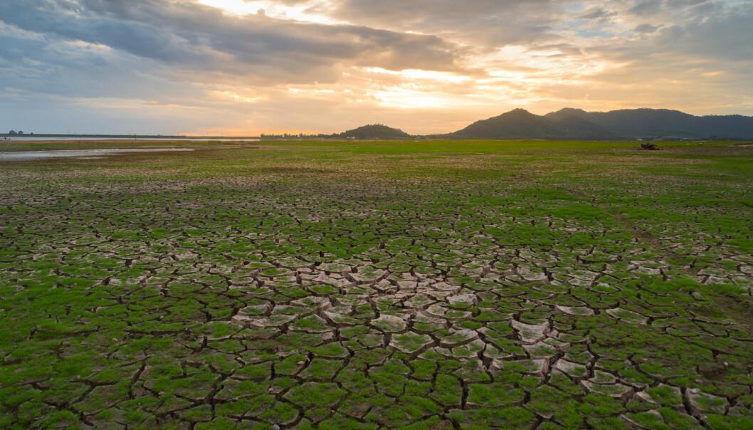 Klimaet endrer verden og fordelingen av de dyrene og plantene som mennesker lever av. Vi må også tilpasse oss, advarer forskere. (Foto: Issarawat Tattong / Shutterstock / NTB scanpix)