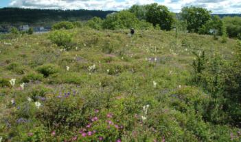 Oslo er Norges «biomangfoldhovedstad» - men hva skjer når naturområdene krymper?