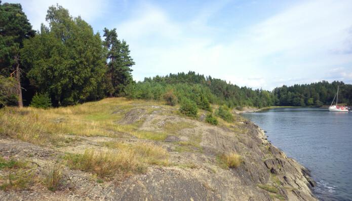 Åpen, grunnlendt kalkmark finner vi ofte i et belte langs sjøen der skogen ikke har fått fotfeste. Her finnes en rekke arter som ikke trives andre steder. Foto: Harald Bratli (NINA/NHM).