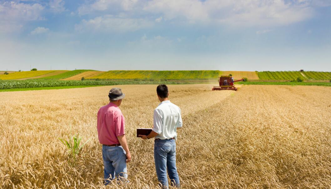 Bønder i Norge tyr helst til hverandre når de trenger råd og kunnskap om gårdsdrifta. (Foto: Shutterstock / NTB scanpix)