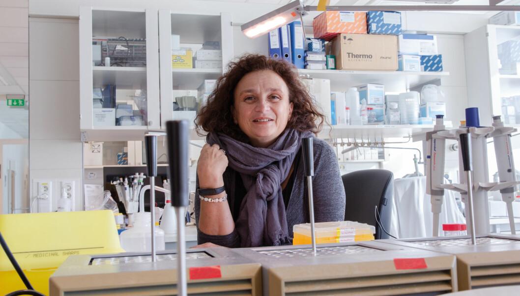 Vessela Kristensen poengterer at simuleringsmodellen kan forbedre dagens kreftbehandling slik at flere overlever sykdommen. (Foto: Yngve Vogt / Apollon)