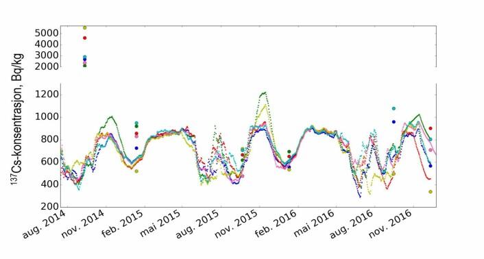 Figur 2: Dei prikka linene viser modellerte cesium-konsentrasjonar i 6 reinsdyr i Vågå frå sommaren 2014 til desember 2016, mens punkta viser målte verdiar i dei same dyra i september og i desember/januar kvart år. Hausten 2014 var det svært mykje sopp, mens det var svært lite hausten 2015. Hausten 2016 var det noko meir sopp enn i 2015.