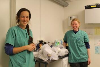 Hundeeiere har i en periode kunnet levere avføringsprøver til undersøkelse til Svalbard Vet. Dyrlege Ragnhild Mehli (til venstre) og dyrepleier Kamilla Buran med dagens fangst av prøver. (Foto: Heidi Enemark)