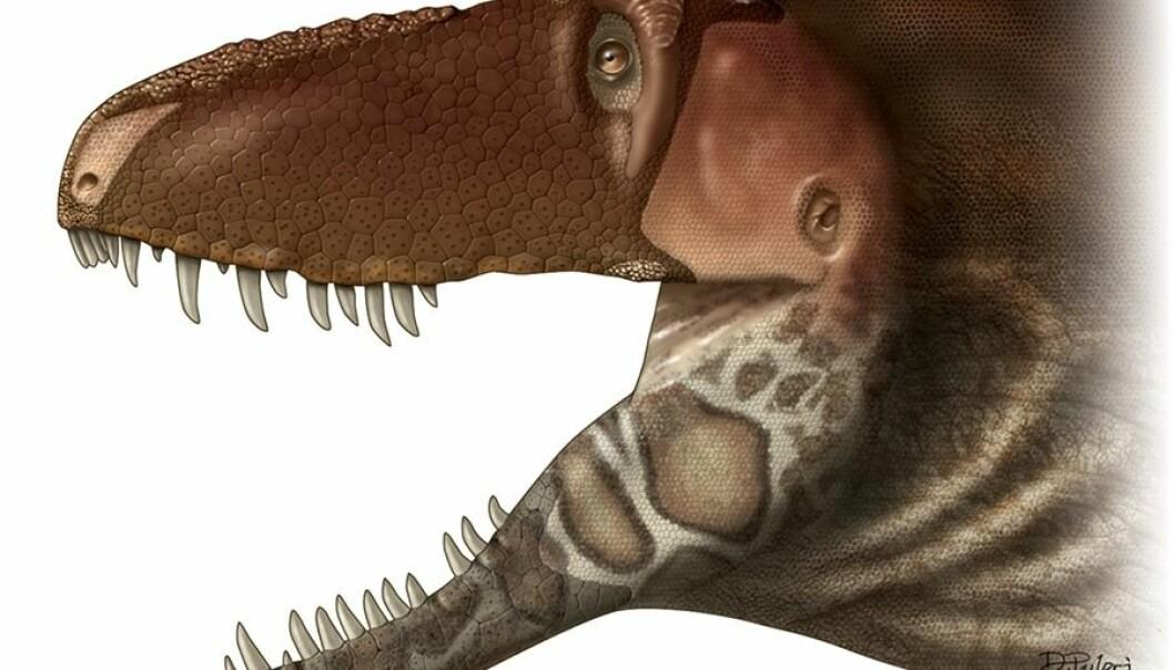 Denne tyrannosaur-varianten kan ha vært veldig sensitiv.  (Bilde: Dino Pulerà)