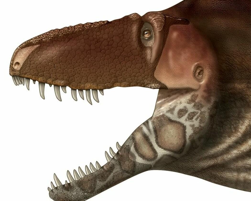 Nye funn gir hint om hvordan Tyrannosauruser så ut