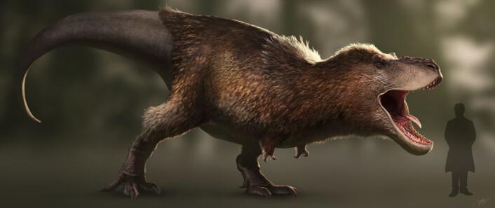 Sånn kan T.rex ha sett ut. Det har vist seg i de siste årene at den kanskje var fjærkledd. (Foto: (Bilde: RJPalmerArt/CC BY-SA 4.0))