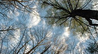 Sliter med å utdanne skogforskere
