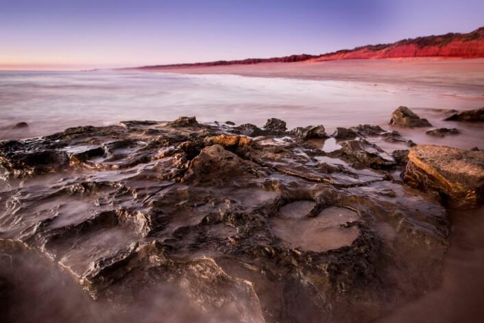Dinosaurspor i Walmadany-området på Dampier-halvøya. (Foto: Damian Kelly)