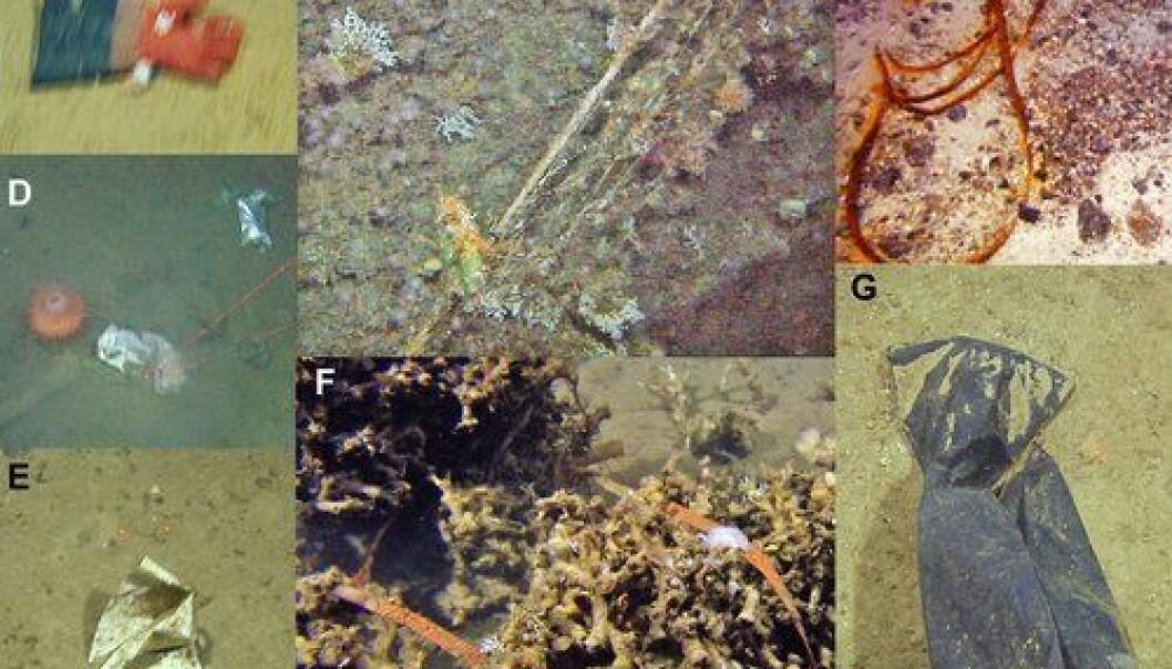 Eksempler på vanlig søppel funnet på havbunnen. En plasthanske, garn som sitter fast i korallrev og trålwire, drikkekartong med plastfôring og plastpose, pakkebånd i korallrev og søppelsekk. (Foto: Havforskningsinstituttet)