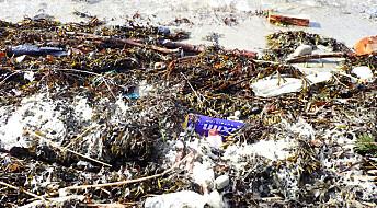 Mikroplast setter seg fast i gjeller, munn og mage på fisken