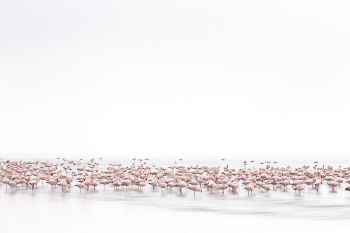 Flamingoer i Walvis Bay langs kysten av Namibia. (Foto: Alessandra Meniconzi, 2017 Sony World Photography Awards)