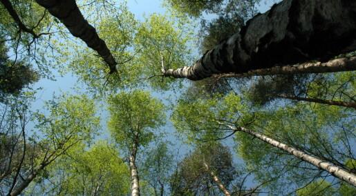 Skog kjøler ned omgivelsene mer enn antatt