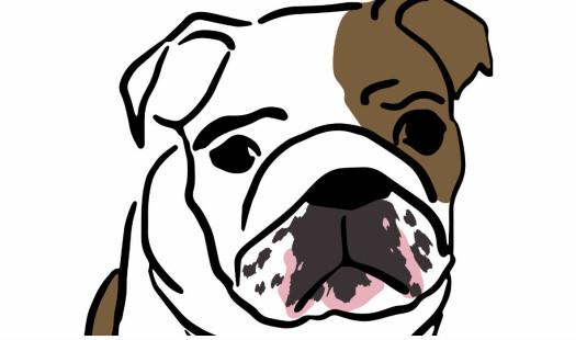 Søt hund sett fra to ståsteder