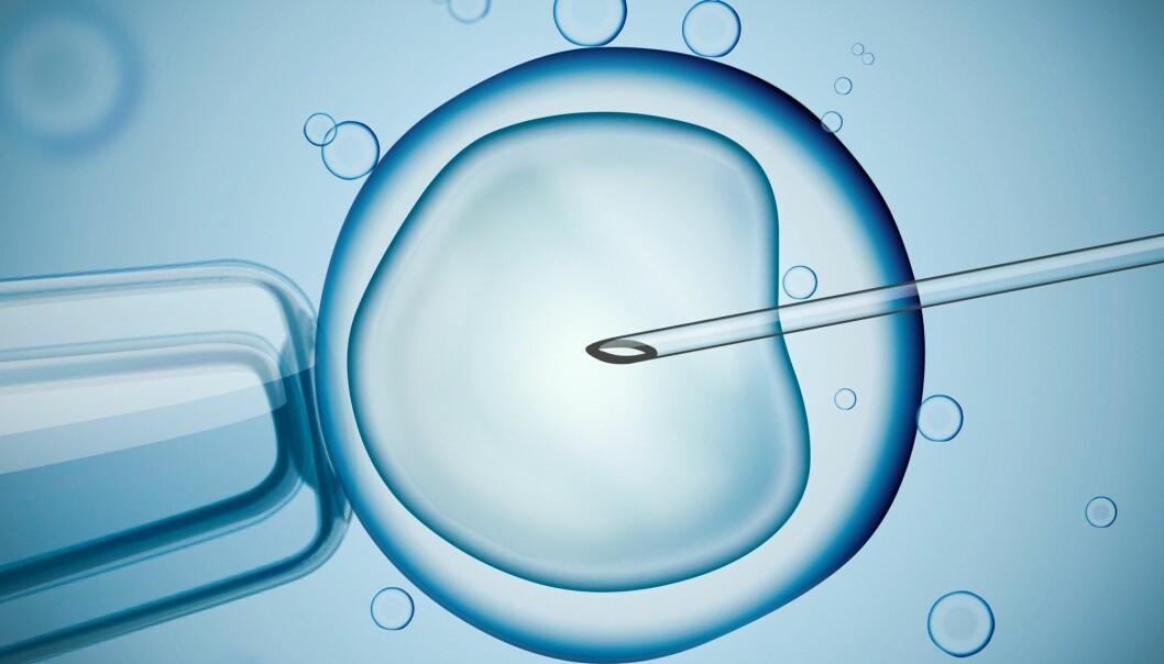 – Ifølge norsk lov er mor den som føder barnet. Å tillate eggdonasjon vil gi barnet én egg-mor (genetisk) og én livmor-mor (biologisk), skriver kronikkforfatterne.