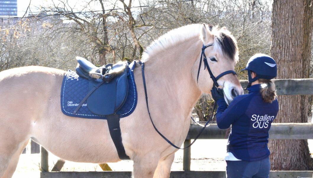 Rusavhengige blir lenger i behandling med hesteterapi